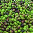 L'olio d'oliva del Monferrato