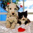 avere un animale domestico fa bene alla salute
